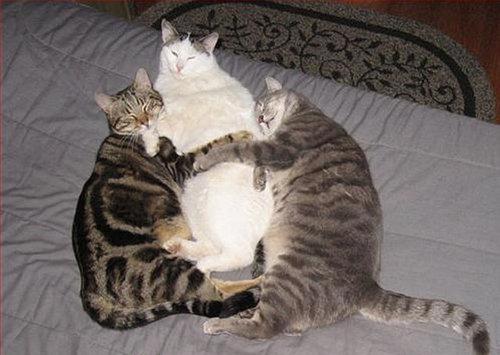 押し倒される猫05