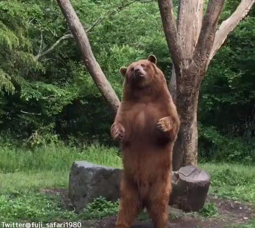 ダンスするクマがかわいい01