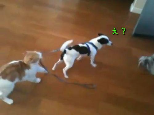犬「あれ?進めない!」猫「ククク……」00