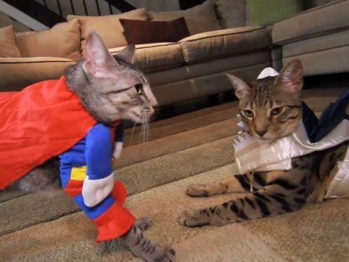 猫のコスプレ01
