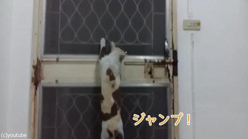 ドアから脱出する猫02