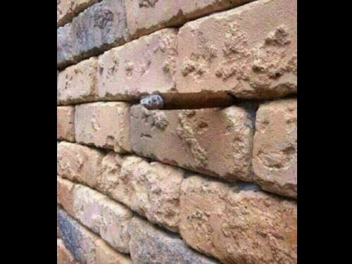 「壁に何が見える?」00