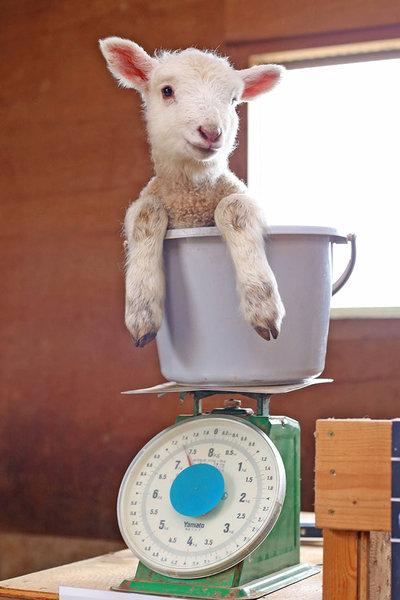動物の体重の測り方11