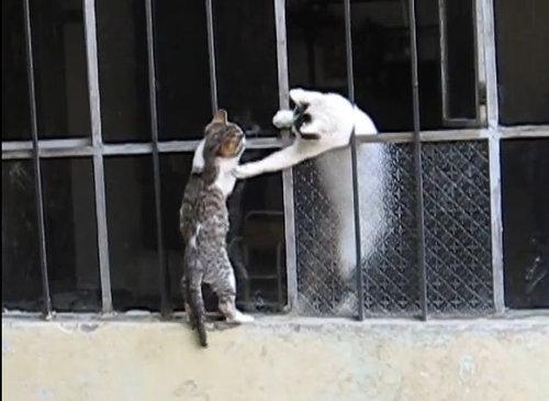 子猫を抱きかかえて助けいれる親猫01