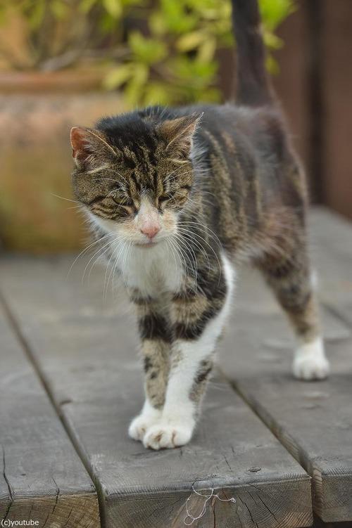 13年後に発見された猫02