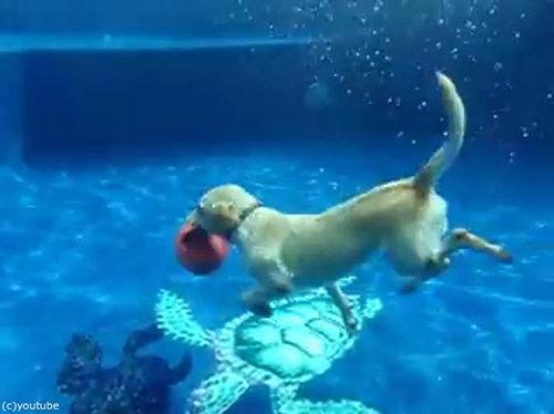 フリスビー犬06