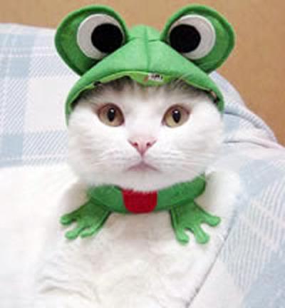 猫コスプレ02