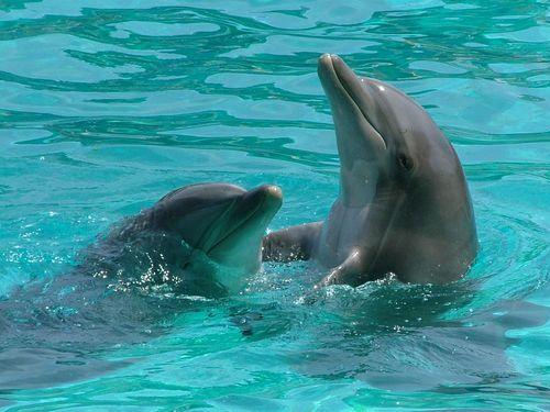 イルカの赤ちゃん00