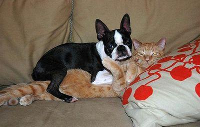 犬と猫の絡み-犬と猫が仲良く抱き合い