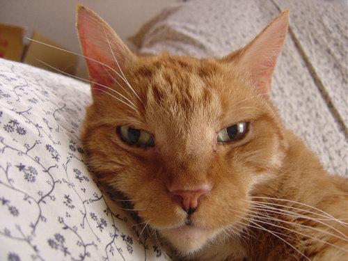 日本で猫の仏葬を体験した21