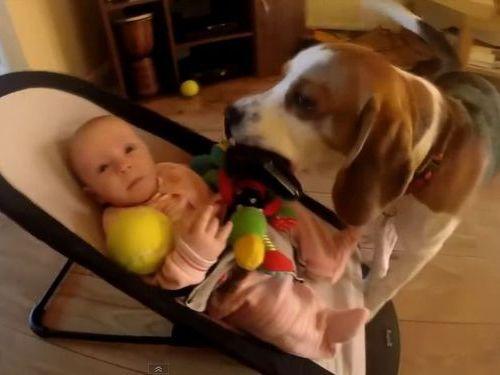 犬「赤ちゃんが泣いちゃった!」01