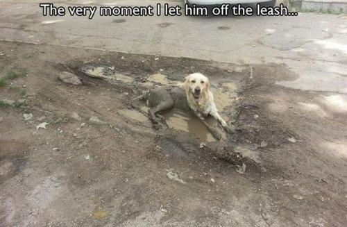 犬の飼い主ならわかること 008