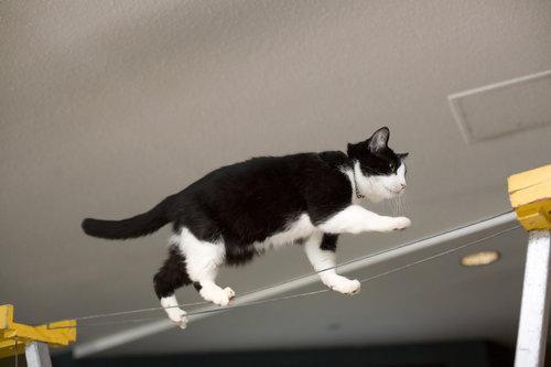 バランス猫11