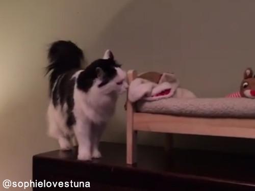 猫のソフィちゃんは毎晩こうやって寝る01