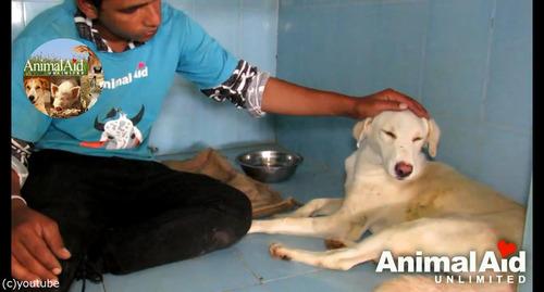 井戸に落ちた犬の救出劇12