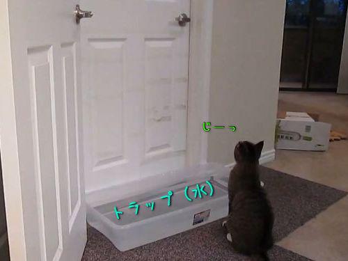 ドアを器用に開ける猫00