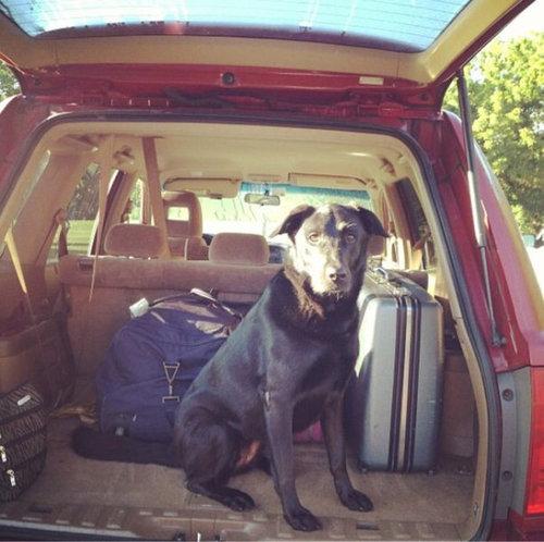 飼い主が旅行に行くことに気付いたペットたち11