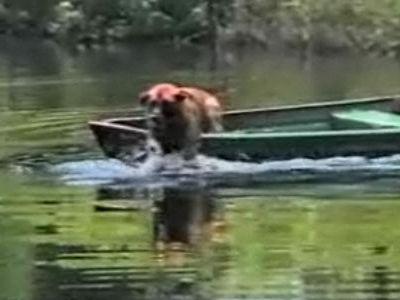 ボートを漕ぐ犬