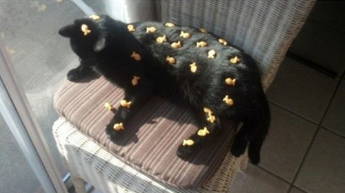 猫をぎゅーっとしたくなる写真12