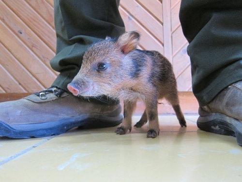 動物の赤ちゃん27