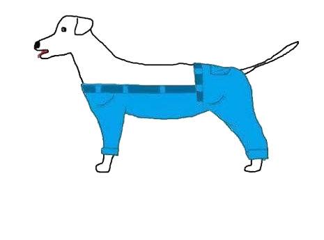 ちょっと考え込んでしまう犬とズボンの疑問03