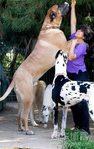 大きな犬のトラブル10