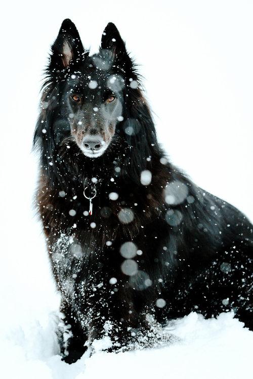クールな犬09