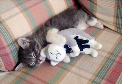 猫ちゃん三段重ね01