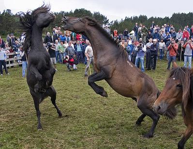 スペインの馬祭り02