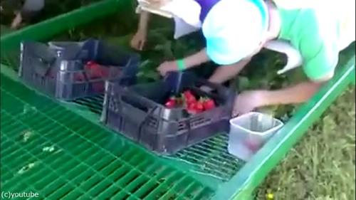 イチゴ収穫マシーン04