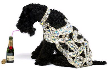犬のヴィヴィアン・ウエストウッドのコート