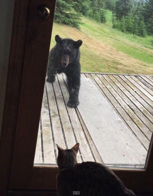 クマを追い払う猫05