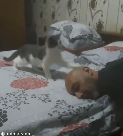 「遊んでニャ—」子猫の可愛すぎるアピール02