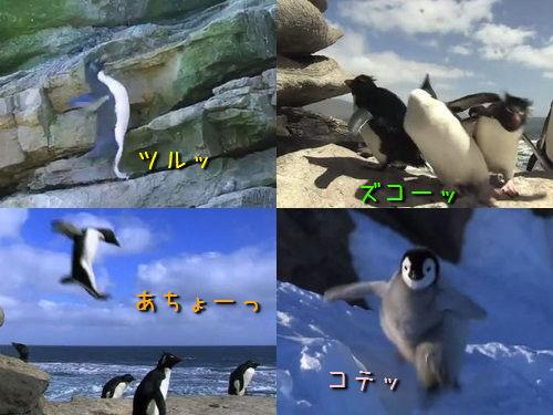 ペンギン特集00