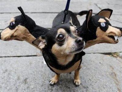 犬猫コスプレ00