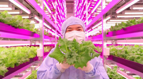 LED人工光型植物工場02