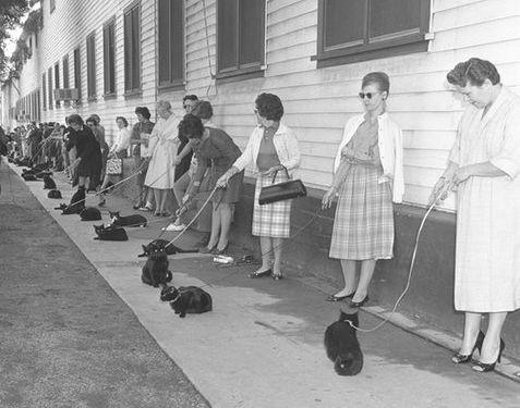 黒猫のオーディション02