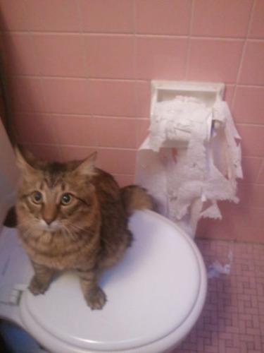 猫の恐怖16
