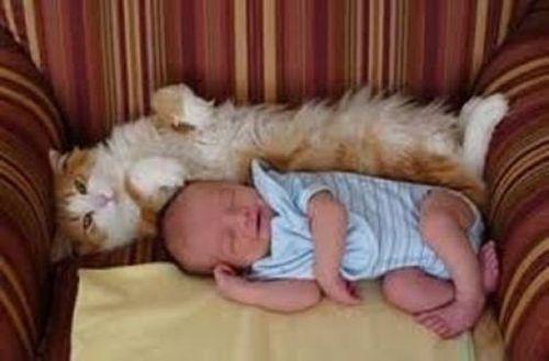 ペットと睡眠13