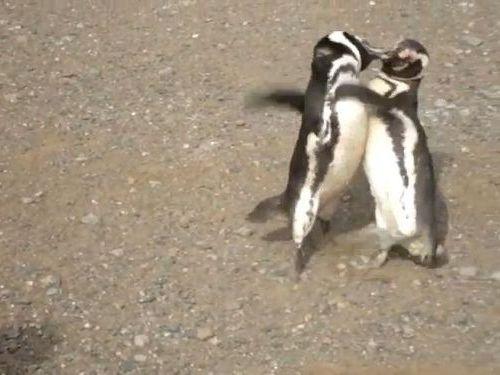 ペンギン・ファイト01