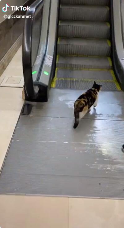 猫、エスカレーターを乗りこなす01