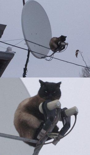 テレビを見るのを邪魔する猫17