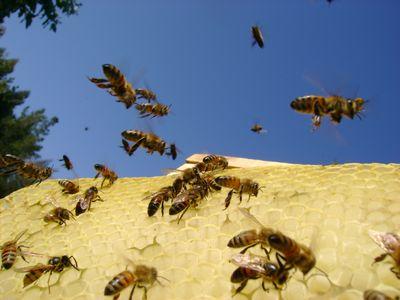 1200万匹のハチがトラック横転で逃げ出す-TOP