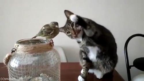 鳥を優しくさわる猫05