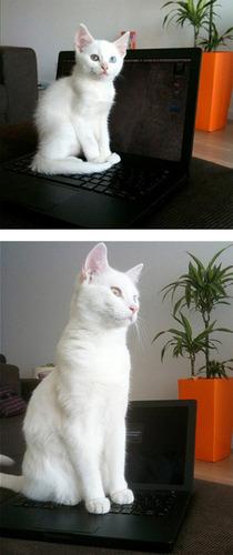 成長した猫05