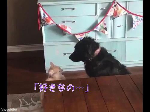 猫が犬に大胆な愛の告白00