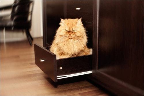 怒った猫13