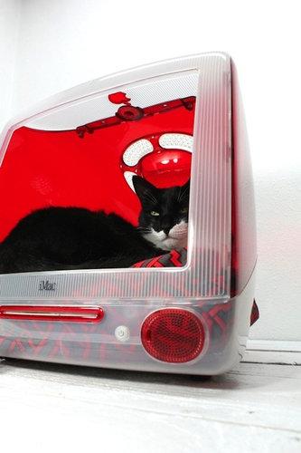 iMacと猫09