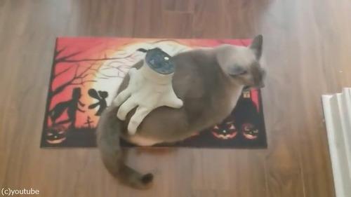 ハロウィンのおもちゃを気にいっちゃった猫03