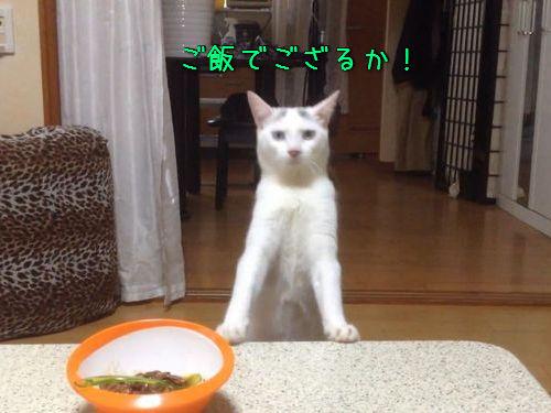 2本足で後ろ歩きする猫00